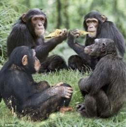 """¿Por qué compartir comida nos hizo humanos? en """"Yo, mono"""" elmundo.es"""
