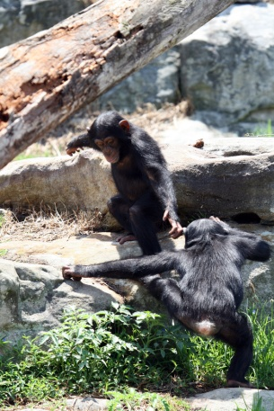 young monkeys climbing on rocks
